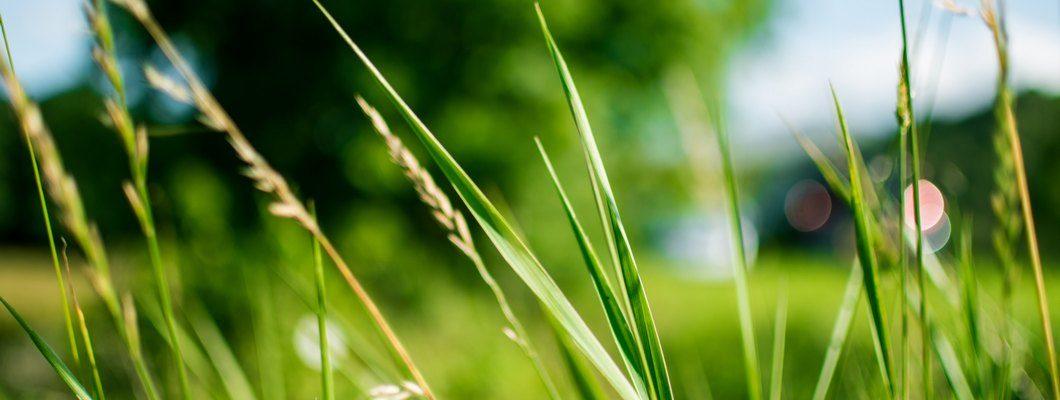 Земельный участок вблизи города Солнечногорска – преимущества